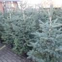 Święta Bożego Narodzenia 2015